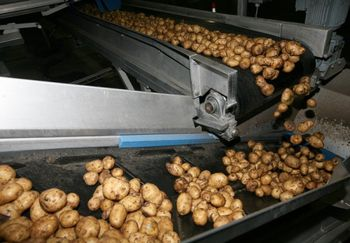 Конвейер с картошкой в оплачены с расчетного счета акции элеватора проводка